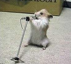 hamster_singt