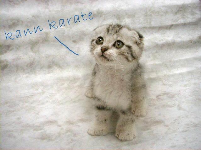 Karate-Katze